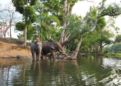 Elephants and mahouts along the Cauvery river