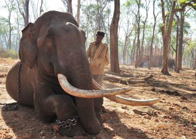The elephant and mahout